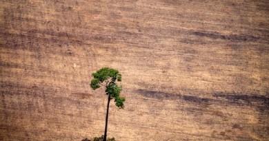 Imagem de 14 de outubro deste ano mostra árvore solitária em área devastada pelo desmatamento ilegal na área de floresta amazônica no estado do Pará (Foto: Raphael Alves/AFP)