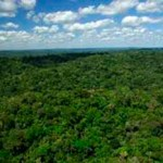 Floresta Nacional do Crepori.