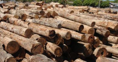 madeira1