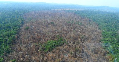 Área derrubada para formação e pasto em Novo Progresso, área de atuação de Ezequiel Castanha, conforme acusação.