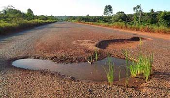 Plantações de milho e soja surgem nos buracos da Rodovia