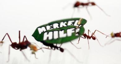 """Formigas """"protestam"""" em zoo alemão para pedir proteção à Amazônia OLIVER BERG/DPA"""