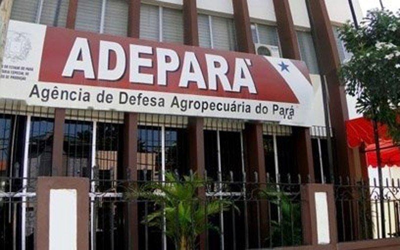 ADEPARÁ anuncia Processo Seletivo com 75 vagas –  Tem vaga para Novo Progresso