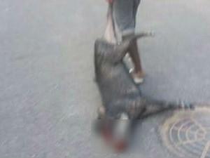 Em imagem compartilhada no Facebook, porco-do-mato é morto em rua de Caracaraí (Foto: Reprodução/Facebook)