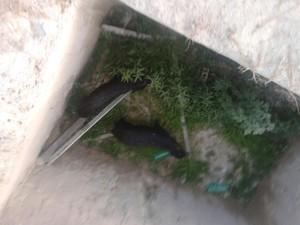 Moradores também acharam porcos-do-mato dentro de buraco (Foto: Arquivo pessoal)