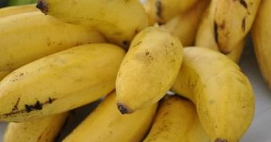 banana_foto_renata_silva_2