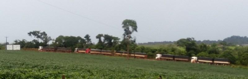 Caminhões flagrados como motoristas descansado as margens da rodovia BR-163.-Foto Jornal Folha do Progresso