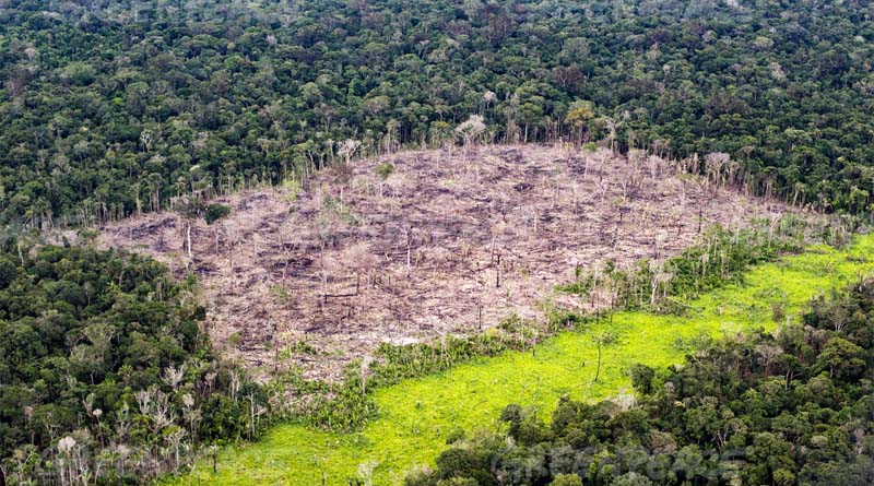 Floresta-amazônica