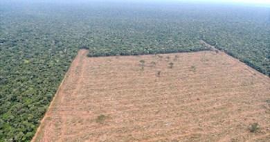 destaque-397962-desmatamento