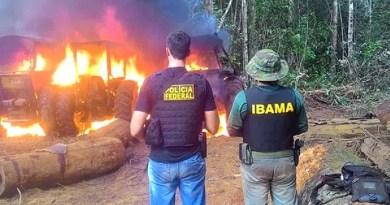 PF e Ibama prendem acusados de extrair madeira no Nortão (MT) e destroem veículos