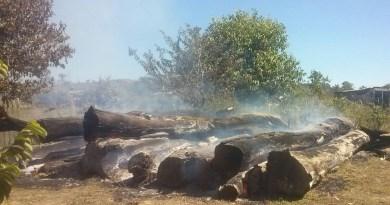 madeira apae1