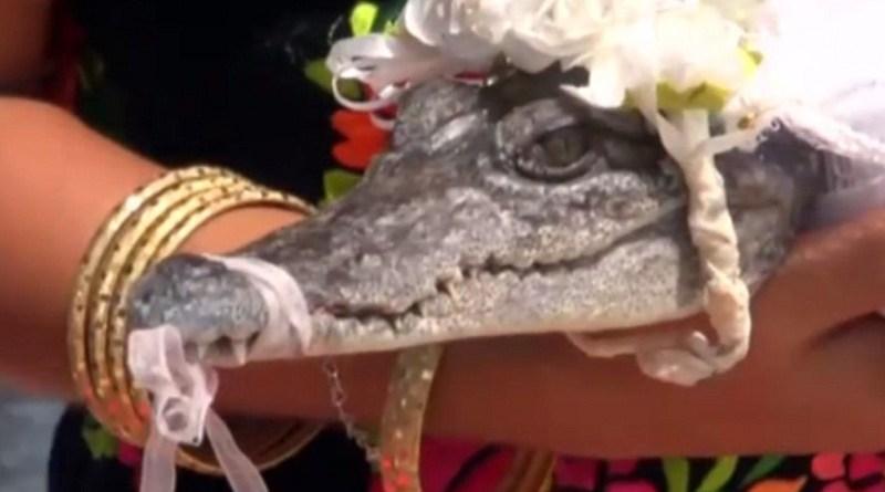 destaque-430291-crocodilo