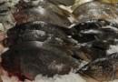 Ração com planta nativa pode enriquecer carne de peixe na Amazônia