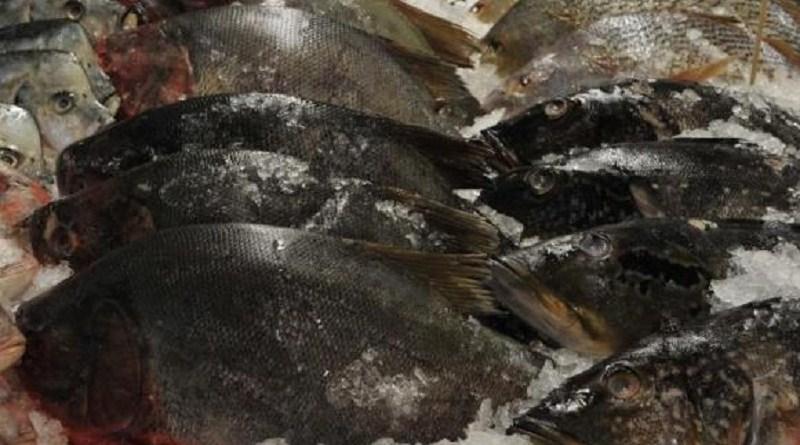 destaque-434220-peixe