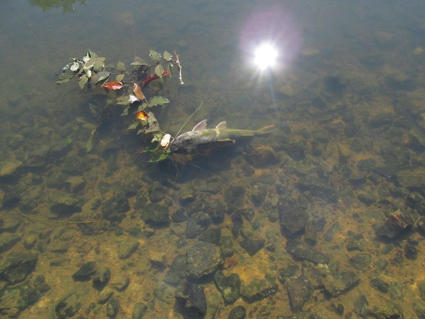 Secretária de Meio Ambiente investiga mortandade de peixes no rio Santa Julia