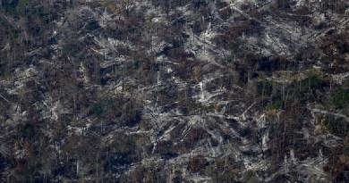 Operação do Ibama na Amazônia luta contra o desmatamento; veja imagens