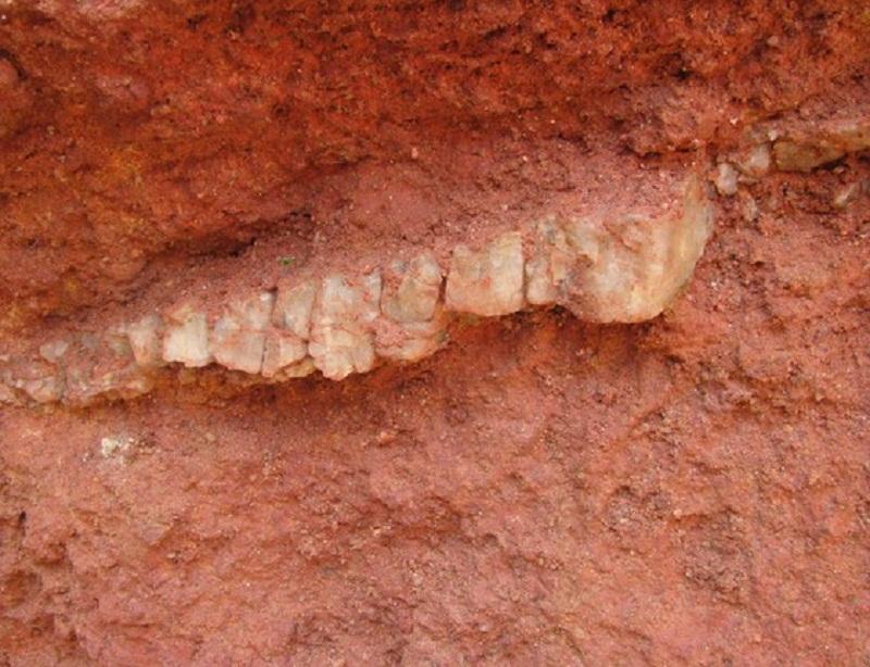 Ouro encontrado em garimpo ilegal na Floresta Estadual do Paru, no Pará (Foto: Imazon)Ouro encontrado em garimpo ilegal na Floresta Estadual do Paru, no Pará (Foto: Imazon)