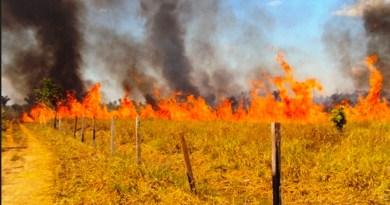 Pecuaristas cobram apoio para ajudar a combater queimadas em fazendas no Nortão