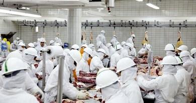 Frigorifico-bovino-carne-de-gado-20-ass