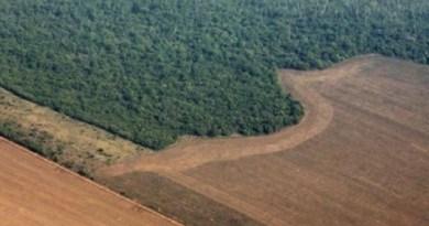 Governo anuncia queda de 16% na taxa de desmatamento na Amazônia
