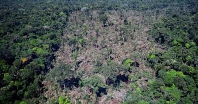(Desmatamento em Novo Progresso Foto:IBAMA)