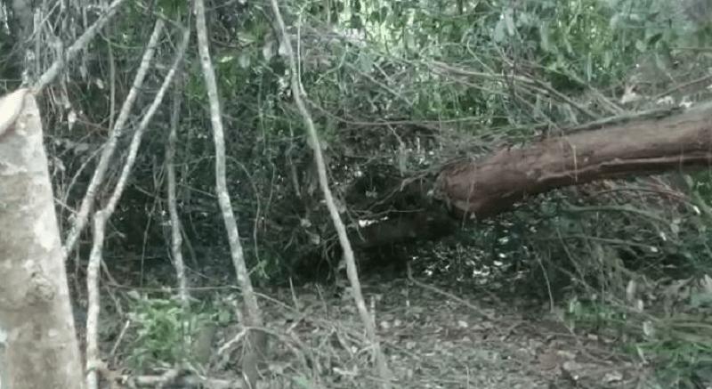 loteamneot maraba