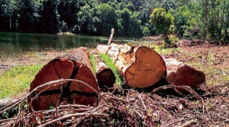 toras desmatamento