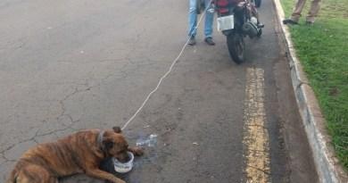Homem é preso em flagrante arrastando cachorro em motocicleta