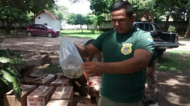 Arlem Lemos, chefe de fiscalização da Semma, ajudou no transporte dos peixes para o campus da Ufopa (Foto: Semma/Divulgação)
