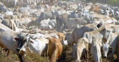 Análise aponta que rebanho bovino responde por 17% das emissões de gases de efeito estufa no Brasil