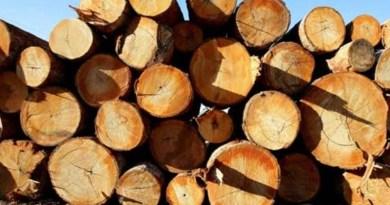 madeira-ilegal1