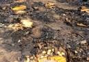Cerca de 20 hectares de lavoura de milho são destruídos por fogo após curto-circuito em colheitadeira em MT