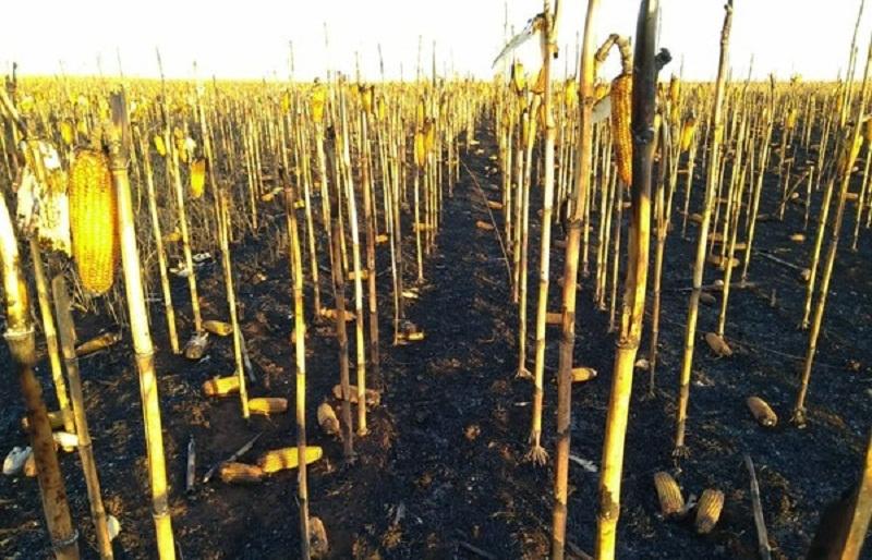 Fogo teria começado em aldeia indígena, segundo os proprietários (Foto: Cléia Tomé/Arquivo Pessoal)