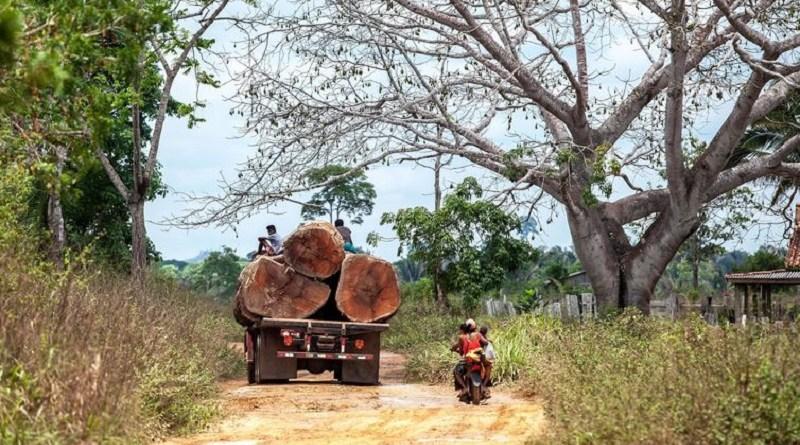 Caminhão carregado com toras trafega pela estrada Trans Iriri – Lilo Clareto/ISA/Direitos reservados