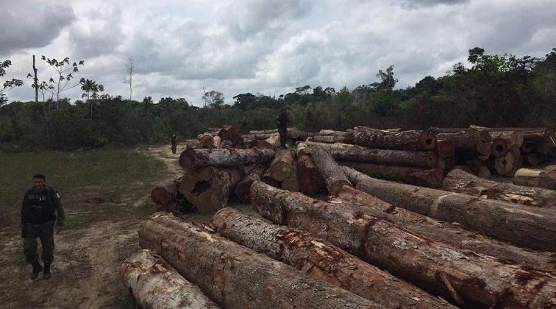 madeira sema