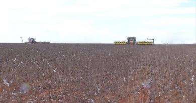 Índios plantam e vendem soja há 15 anos em MT com mão de obra própria e capacitada e recebem elogio do presidente da Funai