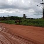 Cavalo é flagrado em via pública no centro de novo Progresso
