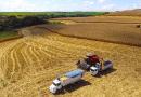 Belterra inicia colheita de grãos com aumento da produção