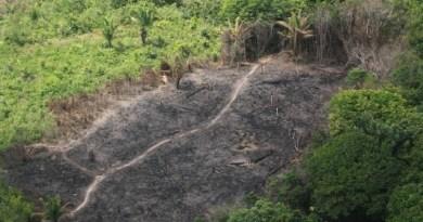 60% dos municípios da Amazônia Legal estão com índices de proteção ambiental abaixo da meta