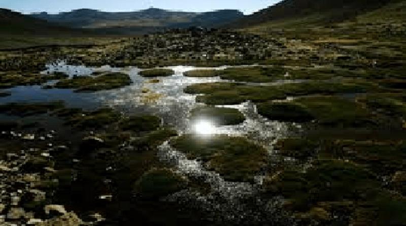 rio hamza