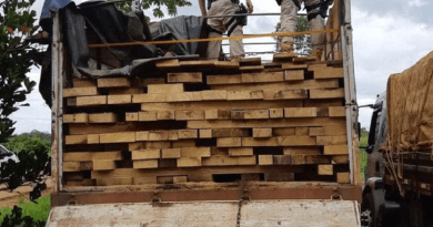 madeira altamira
