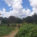 Policia Militar atende denuncia e retiram invasores da casa de tratamento de esgoto em Novo Progresso