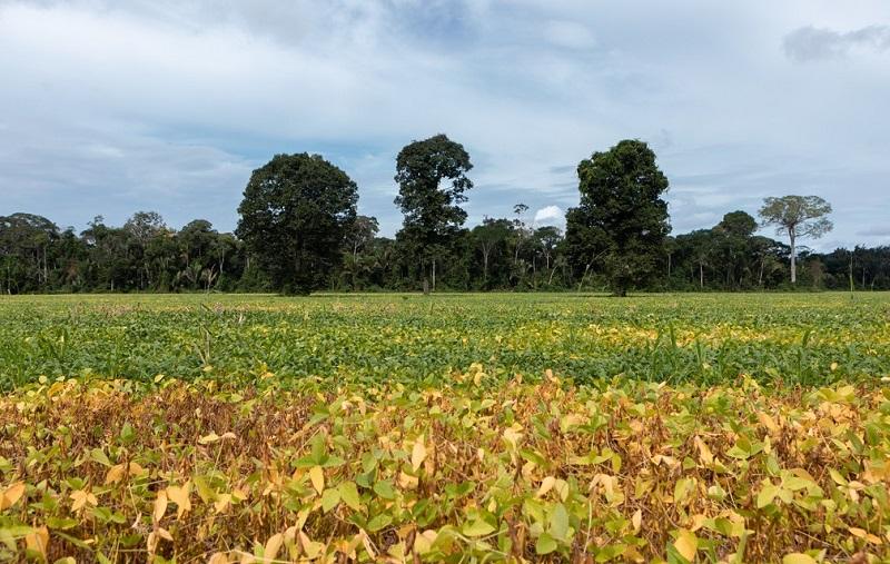 Valor da produção agropecuária no Brasil — Foto: Rodrigo Cunha/G1