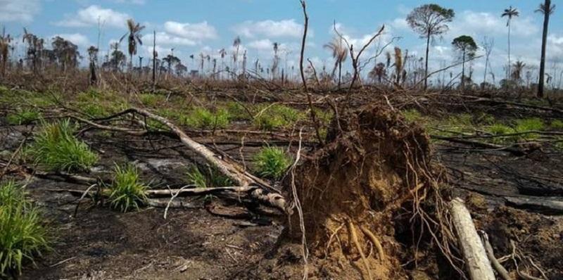Operação descobriu aproximadamente 2.000 ha de área desmatada na Área de Proteção Ambiental Triunfo do Xingu, no Pará. — Foto: Ascom/Semas