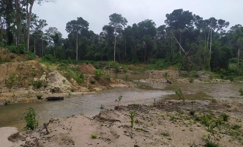 Área Periciada (Foto:Via WhatsApp Jornal Folha do Progresso)