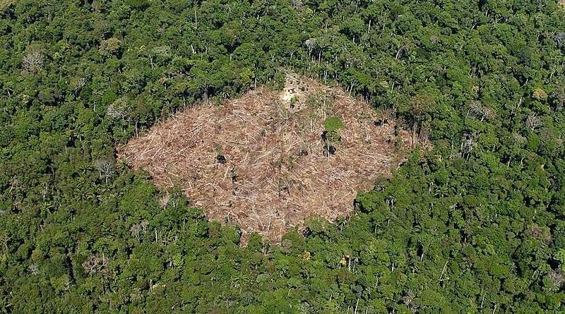 Progressense na lista dos 25 maiores desmatadores da Amazônia – Saiba quem são eles;