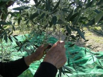 donne-e-olive
