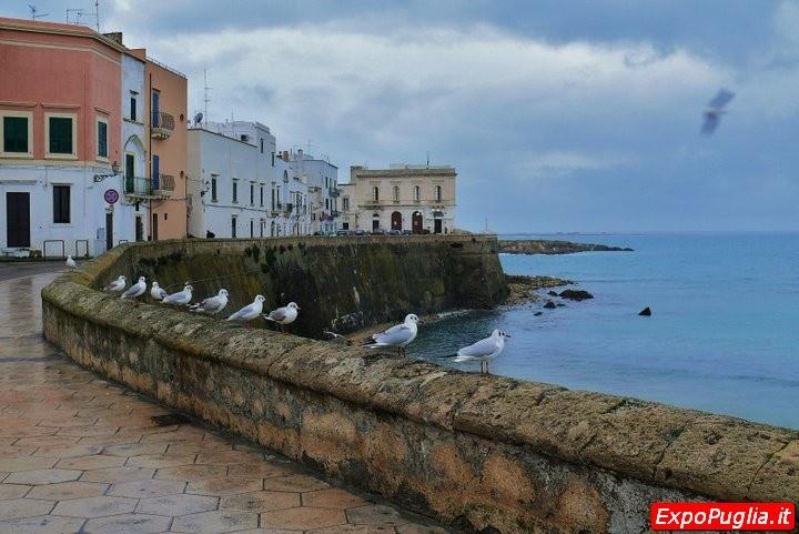 immagine tratta da http://www.expopuglia.it/turismo/visita-la-puglia/brindisi-e-provincia/lecce-e-provincia/gallipoli-e-i-gabbiani-lecce-208