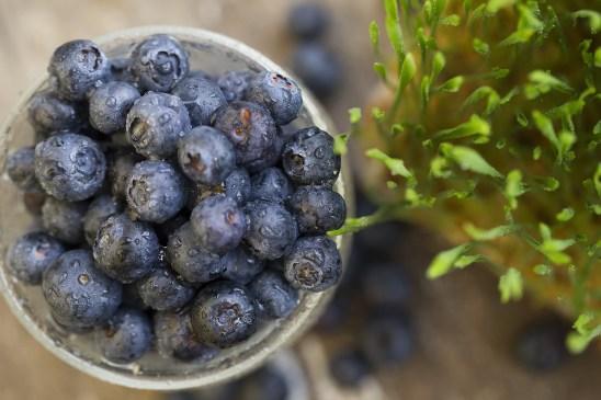 Blueberry-and-grass-web.jpg