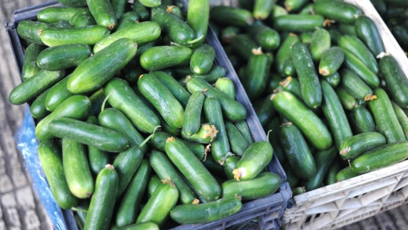 Kitchen Dilemmas 101: What To Do With Too Many Cucumbers?